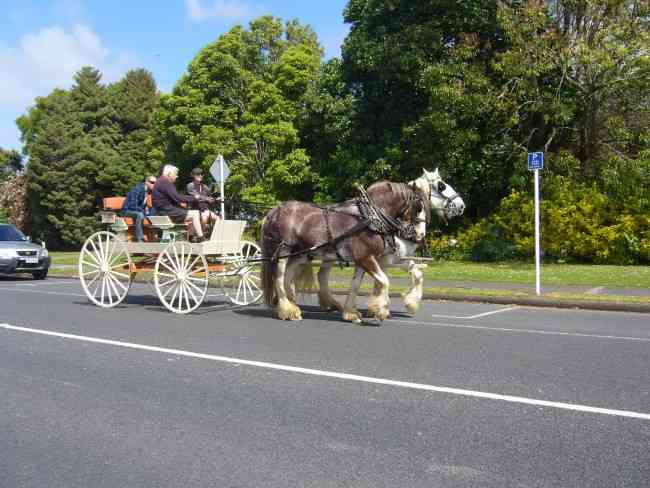 You can travel like this in KERIKERI