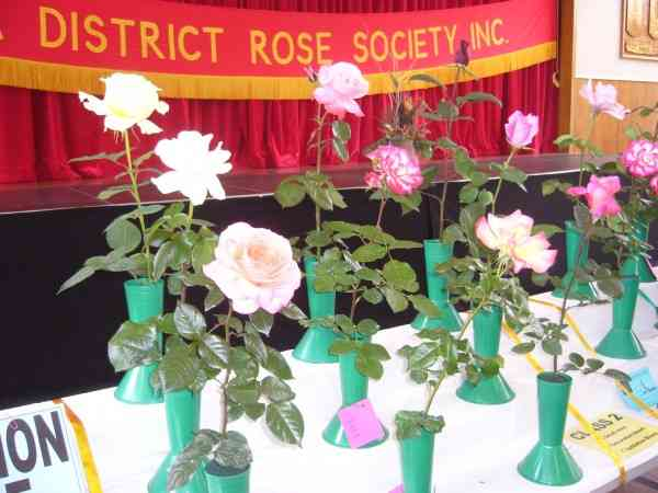 AND MORE ROSES