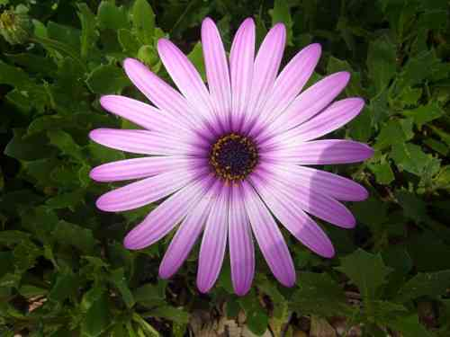 Another Beautiful Flower